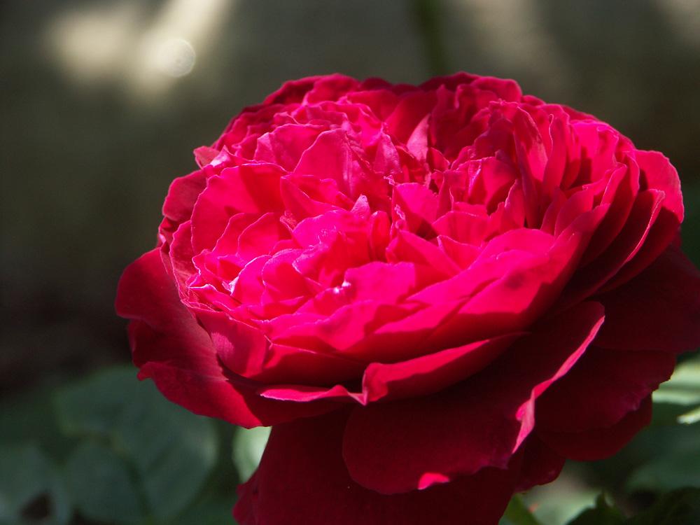 Rosa-Gospel-130722(1)