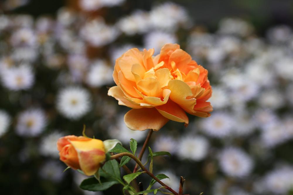 Rosa-Pat-Austin-130913(3)